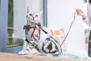 CBD FOR PET ANXIETY: HOW CBD CAN MAKE YOUR VET VISIT RUN MORE SMOOTHLY